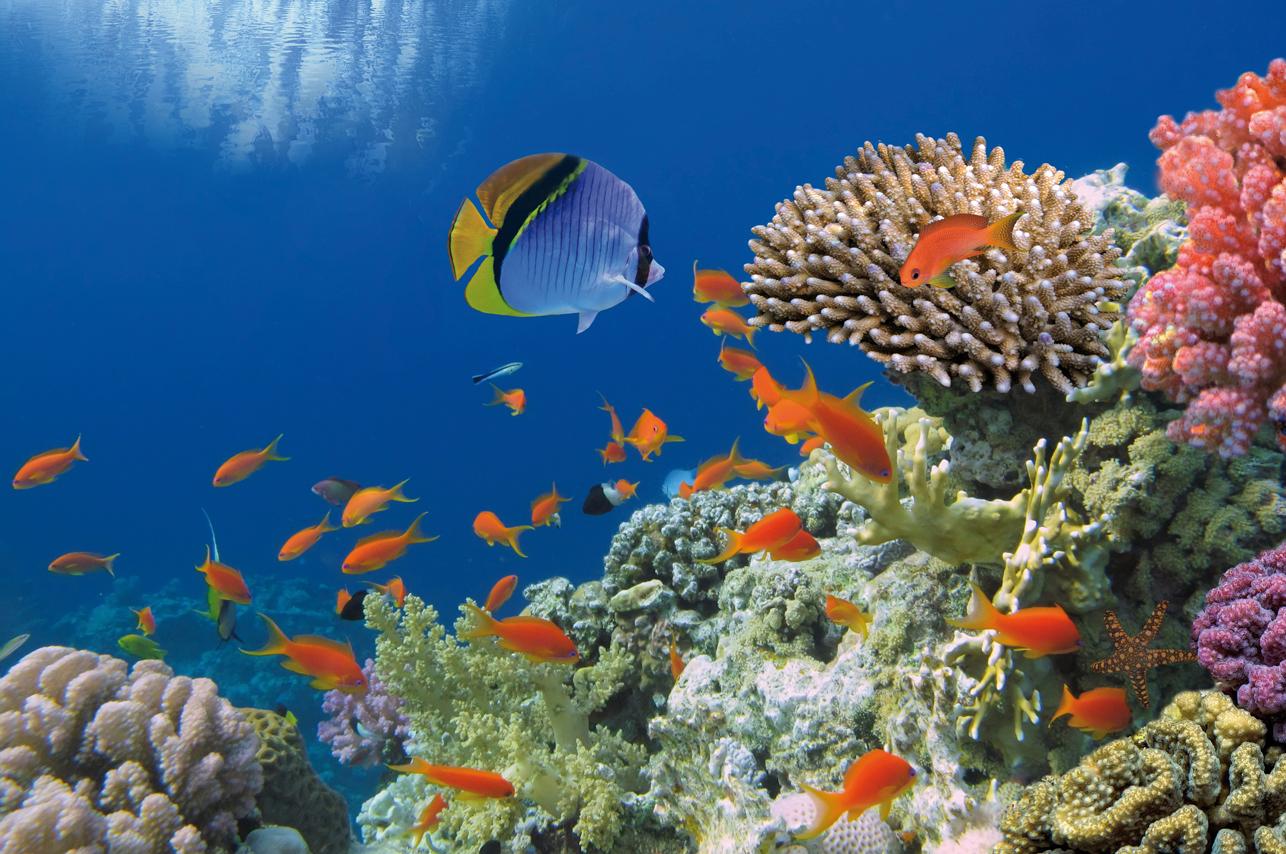 biodiversité-marine-PHOTObis